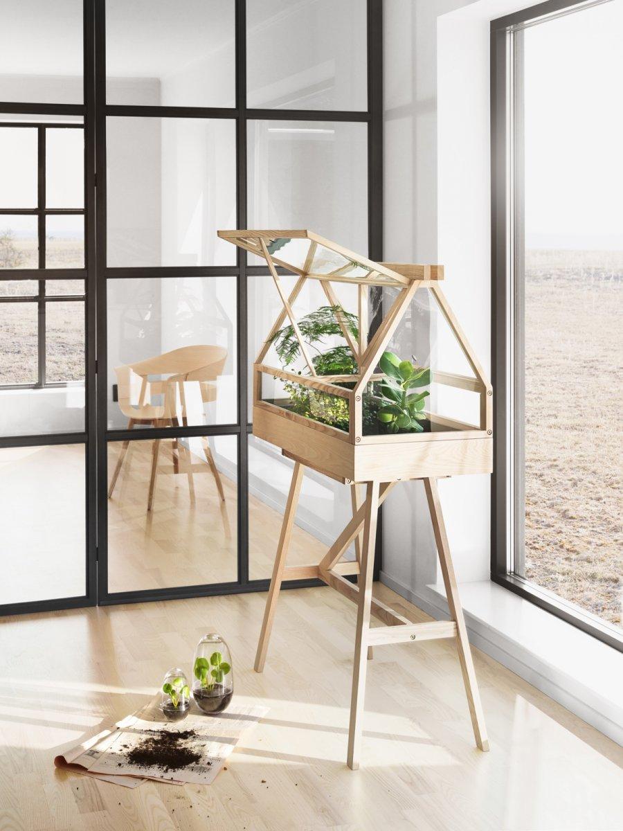 Greenhouse, ash.