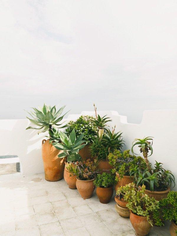Rooftop container garden. Tangier Properties