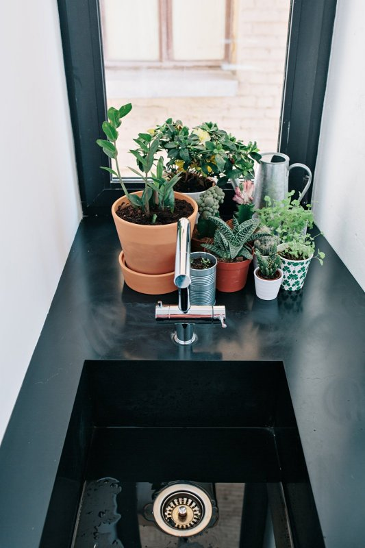 Little plants on sink. Black and White Apartment by Crosby Studios