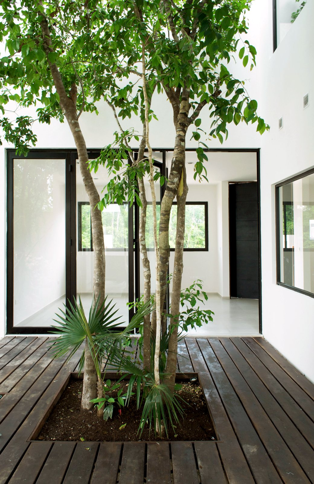Central tree courtyard w41 by warm architects up interiors - Patios de casas ...